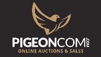 pigeoncom.com